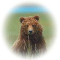 Yellowstone Grizzly © Page Makers, LLC - All Rights Reserved