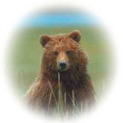 Yellowstone Up Close and Personal Grizzly Logo © Copyright Page Makers, LLC