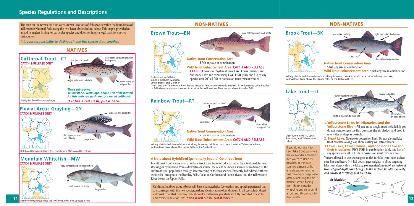 yellowstone national park fishing regulations