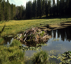 Beaver Pond ~ NPS Photo