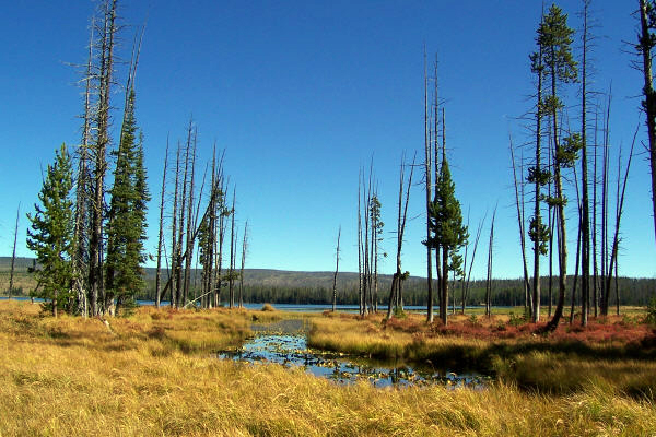 Beula Lake in Yellowstone National Park by Bill Brown © Copyright All Rights Reserved