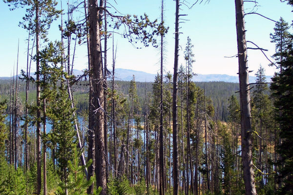 Beula Lake from the trail in Yellowstone National Park by Bill Brown © Copyright All Rights Reserved