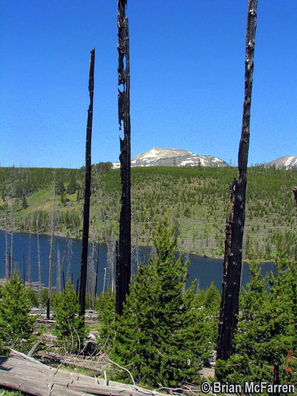 Grizzly Lake - Yellowstone National Park ~ Photo by Brian McFarren © Copyright All Rights Reserved