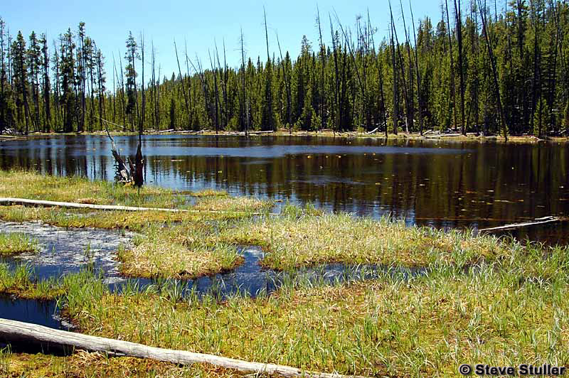 Lily Pad Lake - Yellowstone National Park ~ Photo by Steve Stuller © Copyright All Rights Reserved