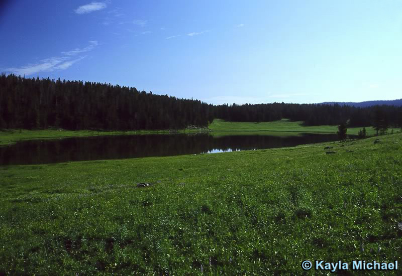 Mariposa Lake - Yellowstone National Park ~ Photo by Kayla Michael © Copyright All Rights Reserved
