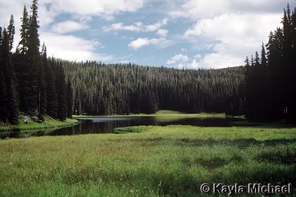 Outlet Lake - Yellowstone National Park ~ Photo by Kayla Michael © Copyright All Rights Reserved