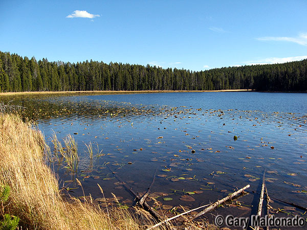Wrangler Lake - Yellowstone National Park ~ Photo by Gary Maldonado © Copyright All Rights Reserved