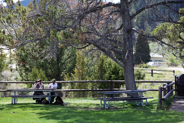 Mammoth Hot Springs Picnic Area by John William Uhler © Copyright