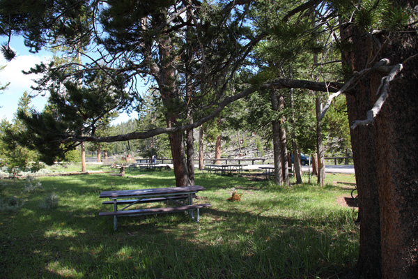 Madison River Picnic Area by John William Uhler © Copyright