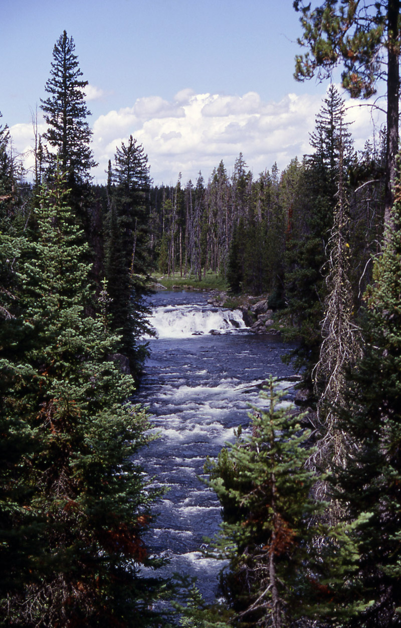 Bechler River - Yellowstone National Park ~ by Keri Thorpe NPS Photo