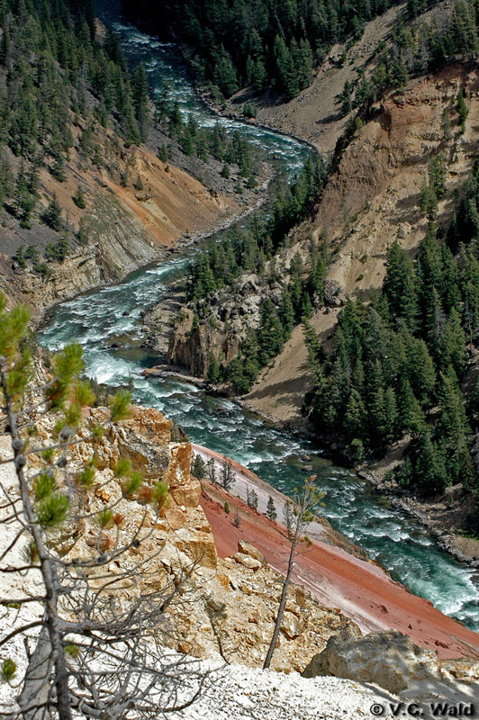 Yellowstone River - Yellowstone National Park ~ Photo by V.C. Wald © Copyright All Rights Reserved