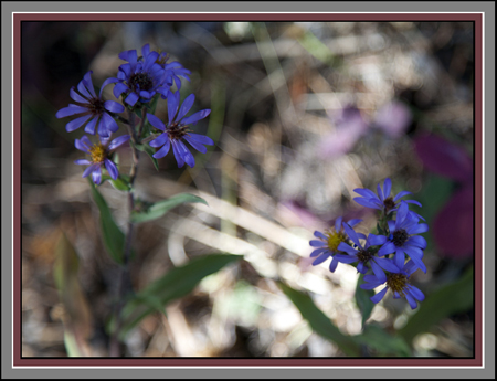 Yellowstone Wildflowers by John William Uhler Copyright © All Rights Reserved